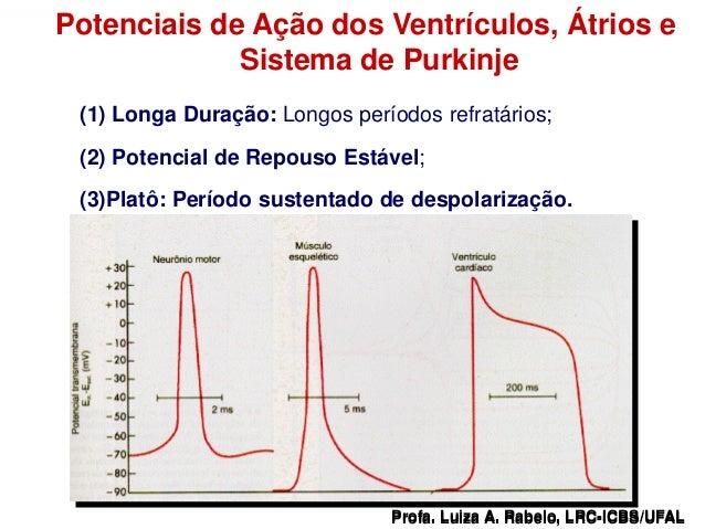 Potenciais de Ação dos Ventrículos, Átrios e                  Sistema de Purkinje        (1) Longa Duração: Longos período...
