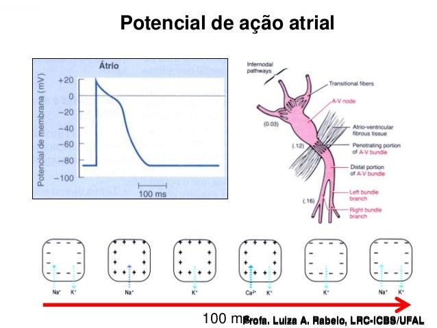 Potencial de ação atrialProfa. Luiza A. Rabelo, LRC-ICBS/UFAL   100 ms                                             Profa. ...