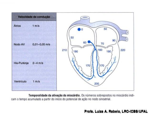 Profa. Luiza A. Rabelo, LRC-ICBS/UFAL   Profa. Luiza A. Rabelo, LRC-ICBS/UFAL