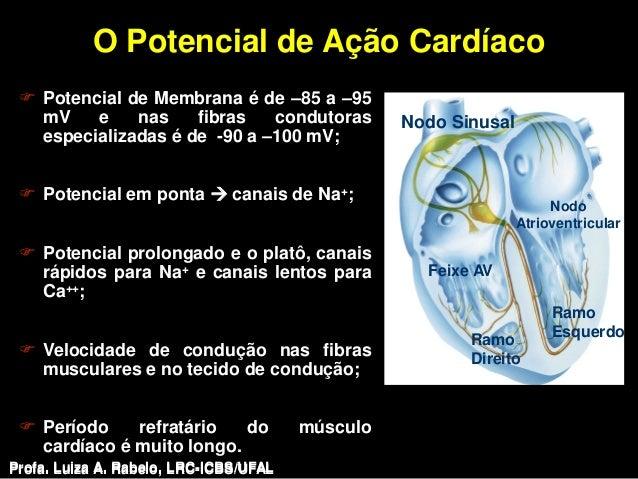 O Potencial de Ação Cardíaco  Potencial de Membrana é de –85 a –95   mV    e    nas    fibras   condutoras           Nodo...