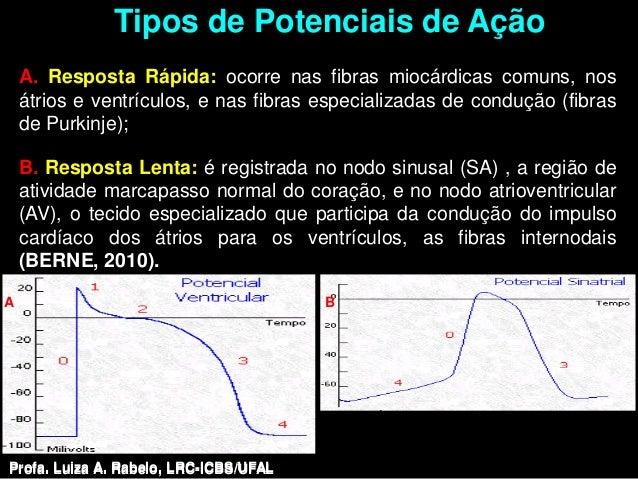 Tipos de Potenciais de Ação    A. Resposta Rápida: ocorre nas fibras miocárdicas comuns, nos    átrios e ventrículos, e na...
