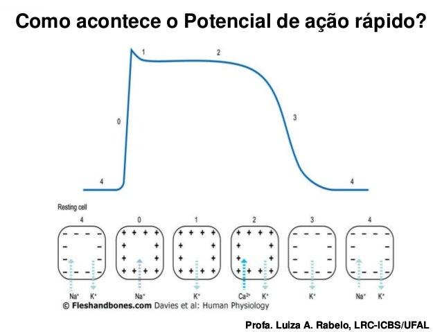 Como acontece o Potencial de ação rápido?Profa. Luiza A. Rabelo, LRC-ICBS/UFAL   Profa. Luiza A. Rabelo, LRC-ICBS/UFAL