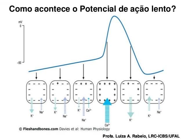 Como acontece o Potencial de ação lento?Profa. Luiza A. Rabelo, LRC-ICBS/UFAL   Profa. Luiza A. Rabelo, LRC-ICBS/UFAL