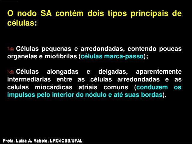 O nodo SA contém dois tipos principais de  células:   Células pequenas e arredondadas, contendo poucas  organelas e miofi...
