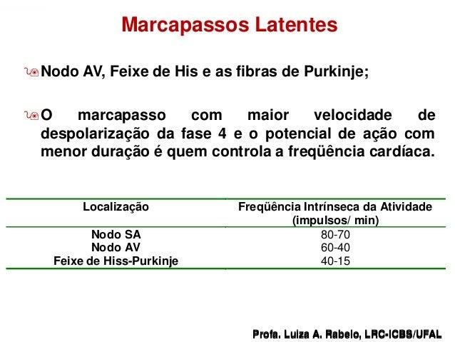 Marcapassos Latentes   Nodo AV, Feixe de His e as fibras de Purkinje;   O   marcapasso      com    maior    velocidade  ...