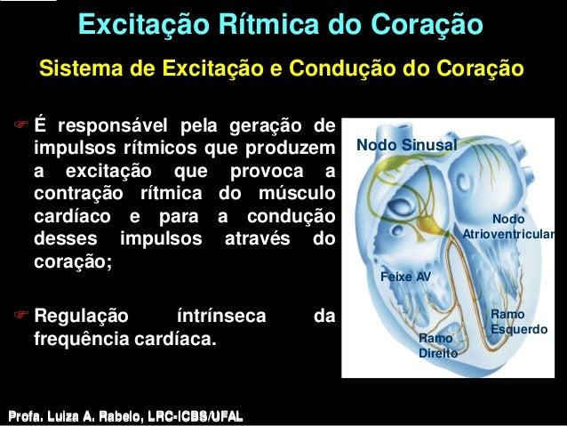 Excitação Rítmica do Coração    Sistema de Excitação e Condução do Coração É responsável pela geração de  impulsos rítmic...