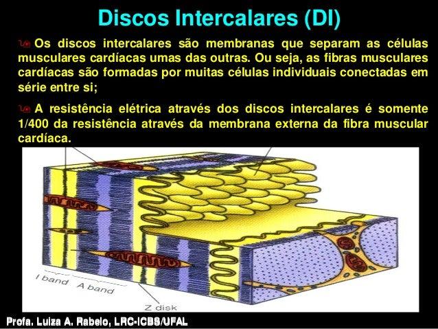 Discos Intercalares (DI)   Os discos intercalares são membranas que separam as células  musculares cardíacas umas das out...