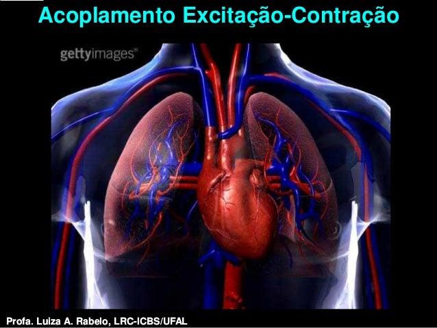 Acoplamento Excitação-ContraçãoProfa. Luiza A. Rabelo, LRC-ICBS/UFAL   Profa. Luiza A. Rabelo, LRC-ICBS/UFAL