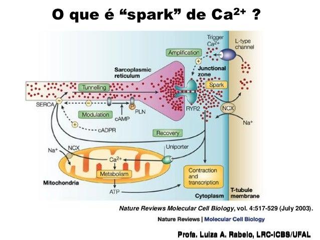 """O que é """"spark"""" de Ca2+ ?                               Nature Reviews Molecular Cell Biology, vol. 4:517-529 (July 2003)...."""