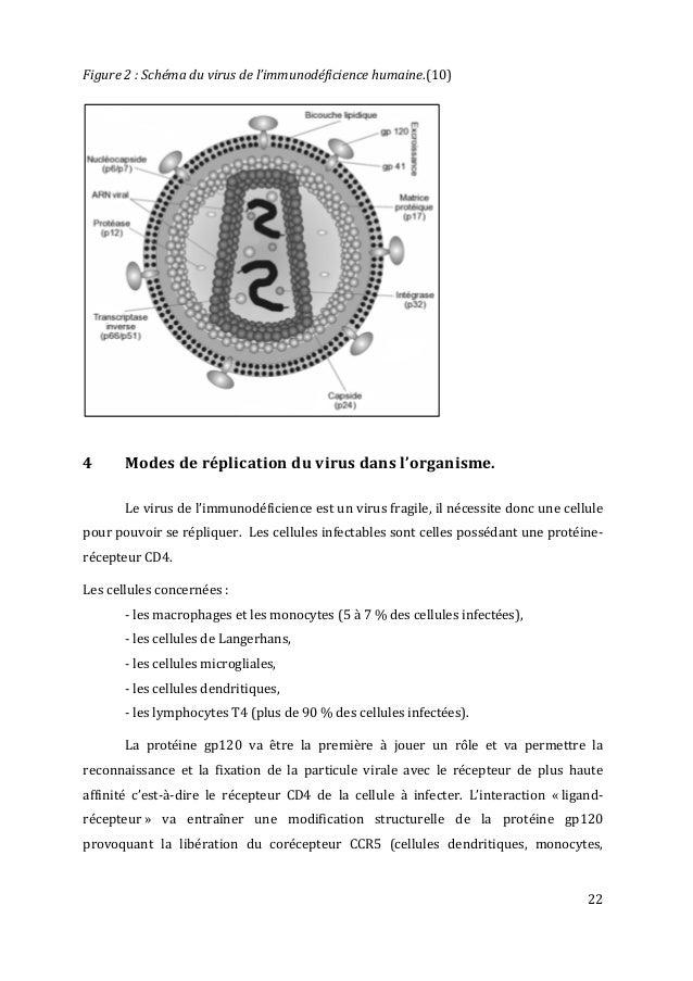 22   Figure  2  :  Schéma  du  virus  de  l'immunodéficience  humaine.(10)      4   Modes ...