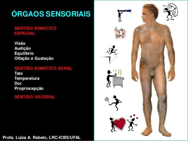 ÓRGAOS SENSORIAIS     SENTIDO SOMÁTICO     ESPECIAL     Visão     Audição     Equilíbrio     Olfação e Gustação     SENTID...