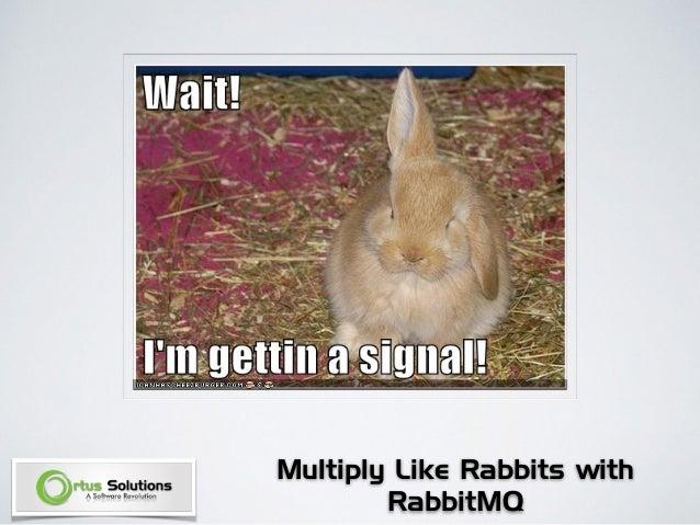 Like Rabbits