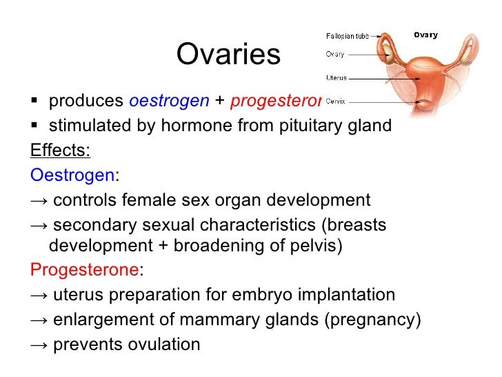What organ produces adrenaline?