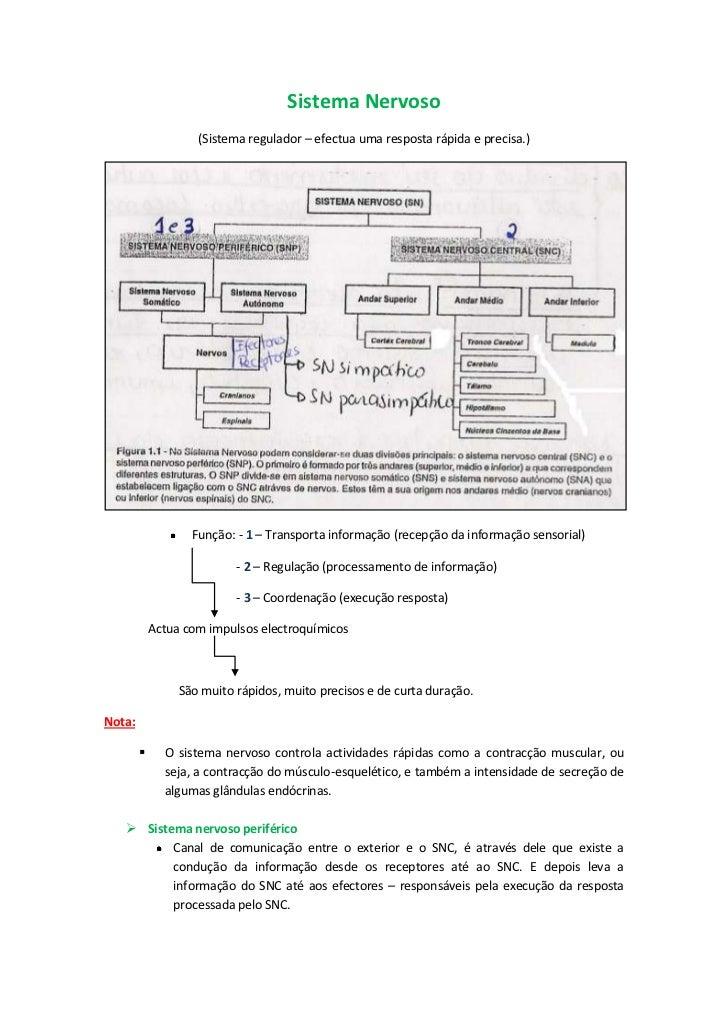 Sistema Nervoso <br />(Sistema regulador – efectua uma resposta rápida e precisa.)<br />Função: - 1 – Transporta informaçã...