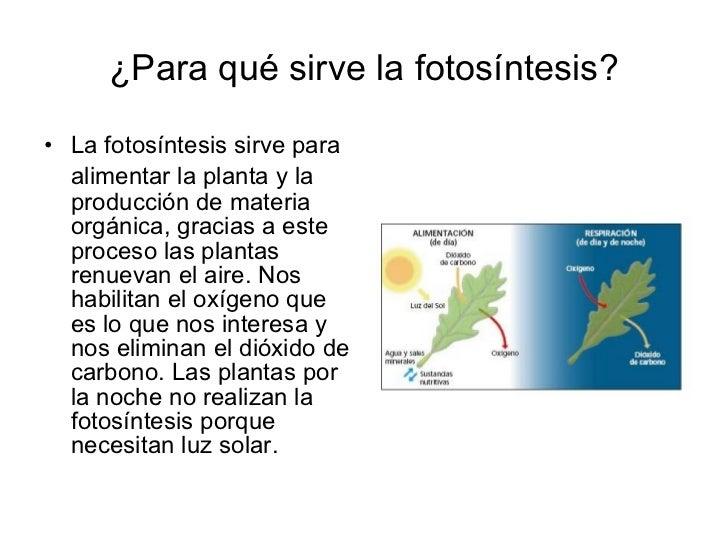 Proceso de fotosintesis yahoo dating 3