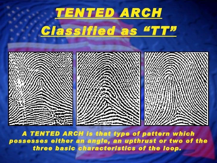 TENTED ARCH; 12.  sc 1 st  SlideShare & Fingerprint Classification - Arch Patterns