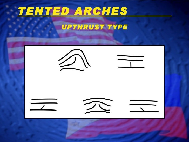 UPTHRUST TYPE TENTED ARCHES ...  sc 1 st  SlideShare & Fingerprint Classification - Arch Patterns
