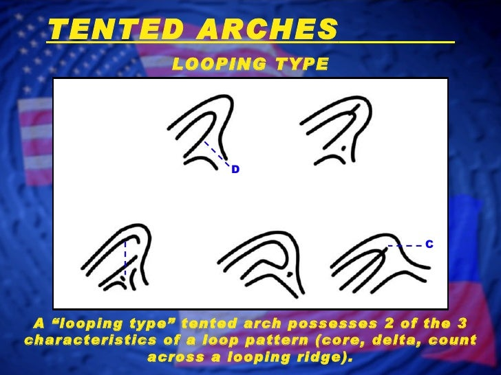 TENTED ...  sc 1 st  SlideShare & Fingerprint Classification - Arch Patterns
