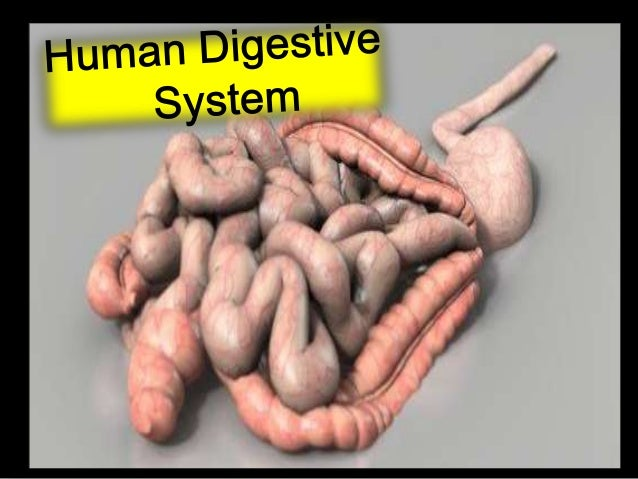 1. Describe the functions of the stomach, duodenum, pancreas, gall bladder, liver, ileum, jejunum in relation to physical ...