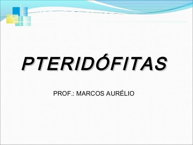 PTERIDÓFITAS PROF.: MARCOS AURÉLIO