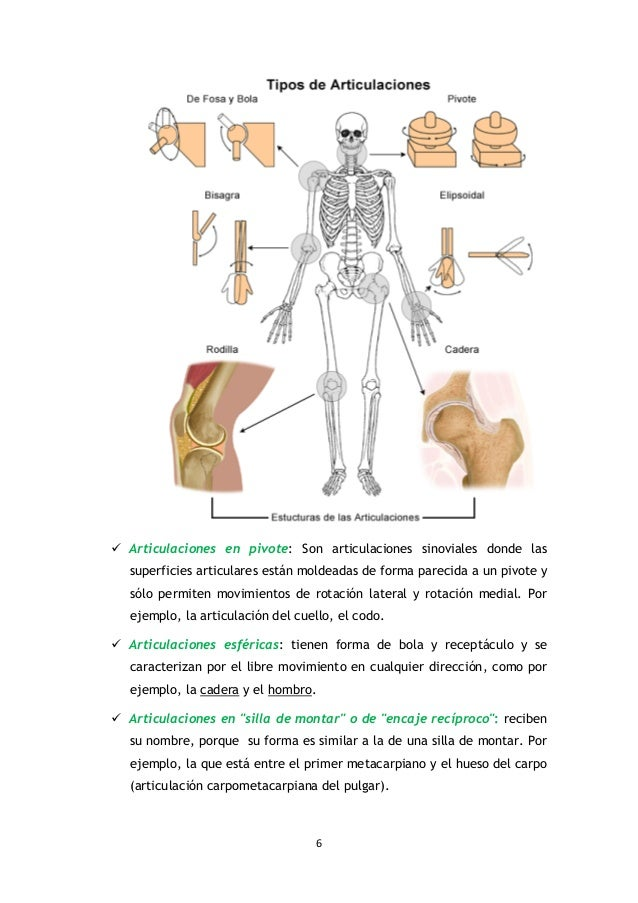 Tipos de Articulaciones en el ser humano