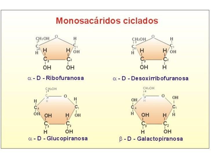 Granos de glucógeno