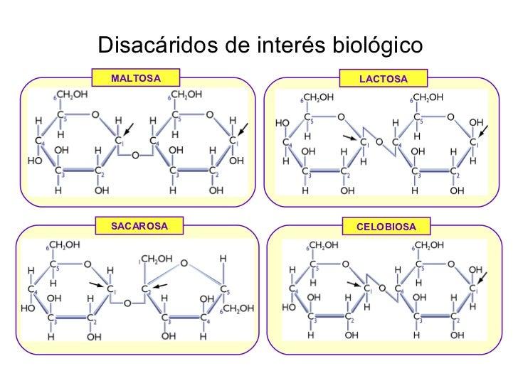 • http://www.bionova.org.es/index.html