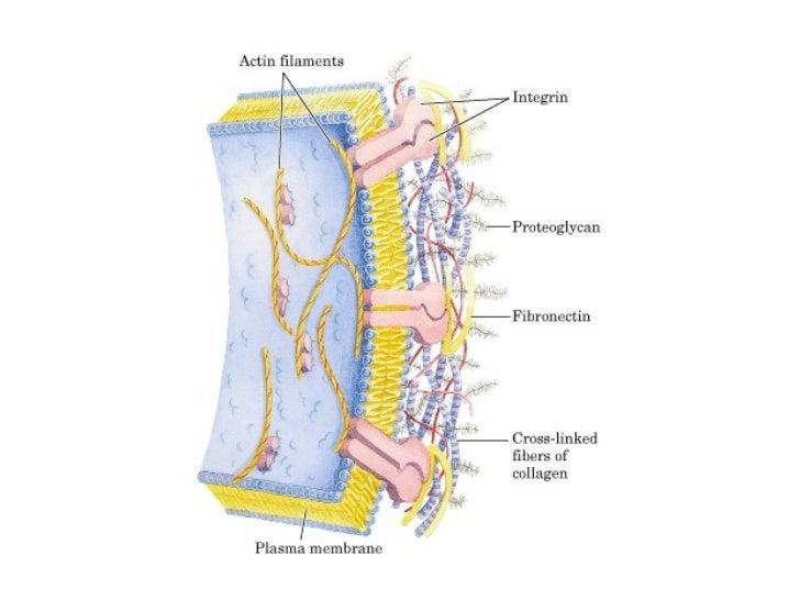 Glúcidos