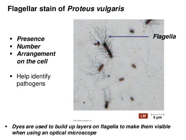 2 bio265 prokaryotes vs eukaryotesdr di bonaventura