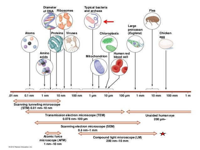 2 bio265 prokaryotes vs eukaryotes_dr di bonaventura