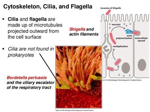 bio prokaryotes vs eukaryotes