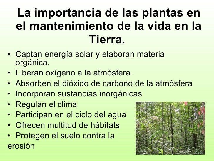 2 biodiversidad y clasificaci n de los seres vivos for Porque son importantes los arboles wikipedia