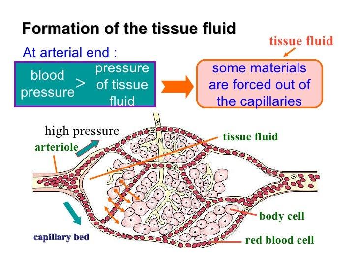 Understanding Capillary Fluid Exchange