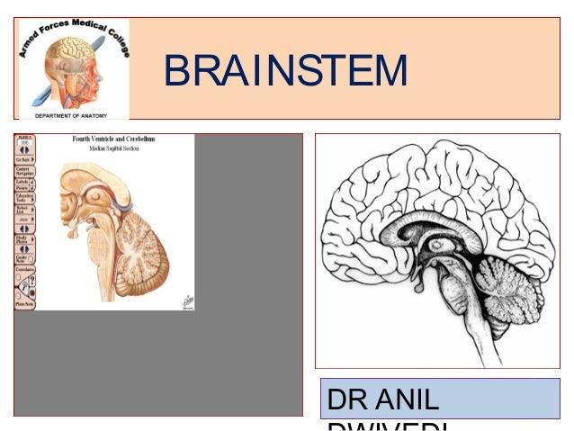 BRAINSTEM     DR ANIL