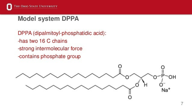 7 DPPA (dipalmitoyl-phosphatidic acid): -has two 16 C chains -strong intermolecular force -contains phosphate group Model ...