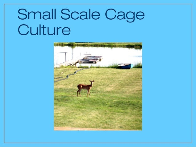 Small Scale CageCulture