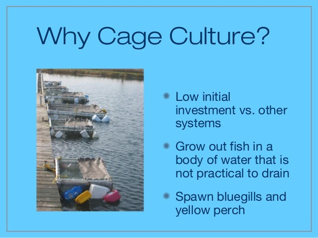 2 cage culture for Feed and grow fish free no download