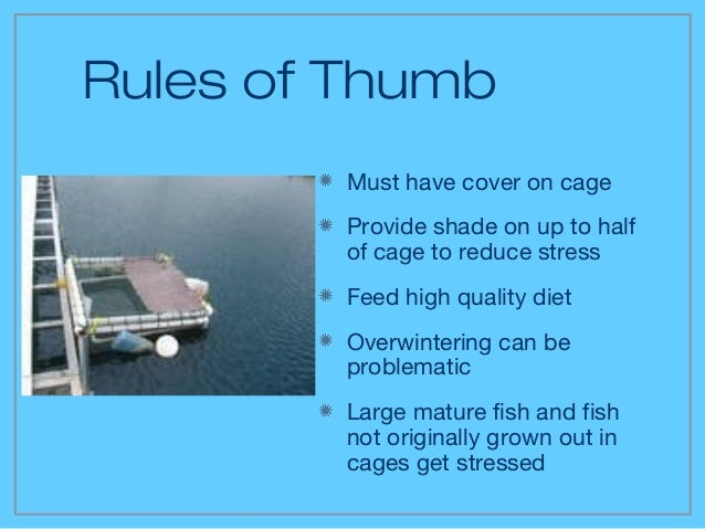 the culture of hybrid stripped bass in cages Hybrid striped bass also known as palmetto or sunshine bass note: for hybrids, all characteristics should be considered in combination, as characteristics in individual fish may vary.