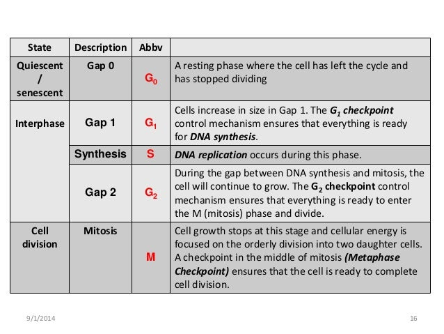 Cell division (Mitosis and Meiosis)