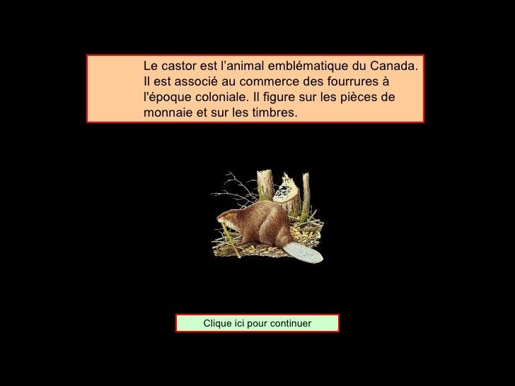 <ul><ul><ul><li>Le castor est l'animal emblématique du Canada. Il est associé au commerce des fourrures à l'époque colonia...