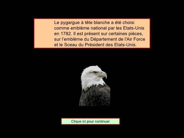 <ul><ul><ul><li>Le pygargue à tête blanche a été choisi comme emblème national par les Etats-Unis en 1782. Il est présent ...