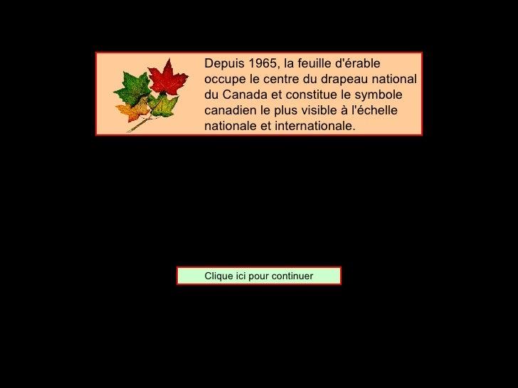 <ul><ul><ul><ul><ul><li>Depuis 1965, la feuille d'érable occupe le centre du drapeau national du Canada et constitue le sy...