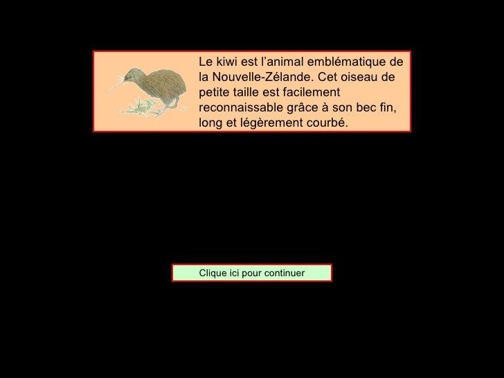 <ul><ul><ul><ul><ul><li>Le kiwi est l'animal emblématique de la Nouvelle-Zélande. Cet oiseau de petite taille est facileme...