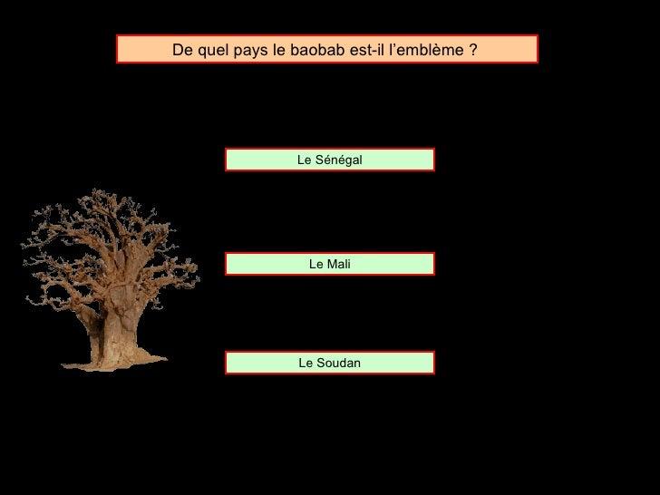 De quel pays le baobab est-il l'emblème ?  Le Sénégal Le Mali Le Soudan