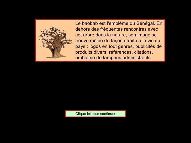 <ul><ul><ul><ul><ul><li>Le baobab est l'emblème du Sénégal. En dehors des fréquentes rencontres avec cet arbre dans la nat...