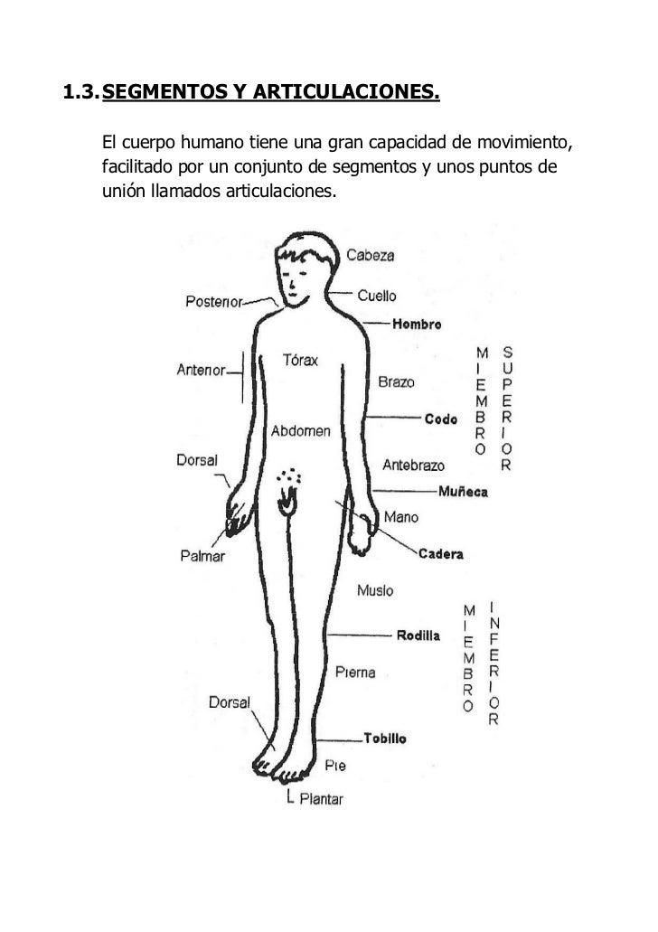Magnífico La Imagen De Las Articulaciones Del Cuerpo Humano Imagen ...