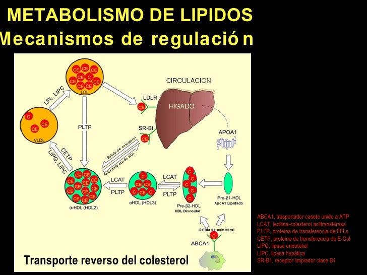 Cracking el código Metabolismo basal