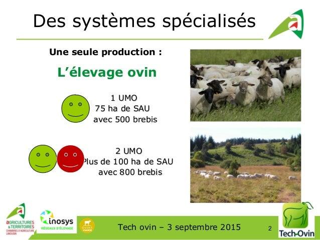 S'installer en élevage ovin (2ème partie)