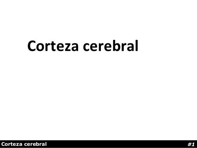 Corteza cerebralCorteza cerebral            #1