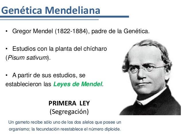 Genética Mendeliana• Gregor Mendel (1822-1884), padre de la Genética.• Estudios con la planta del chícharo(Pisum sativum)....